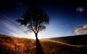 Nature_Other_Lonely_Tree_031434_